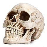Readaeer Calavera Resina Decoración de Halloween Cráneo Humano Modelo